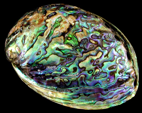 Abalone Shell Tumbled Portion